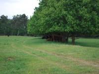Natuurpark 'De Maashorst'